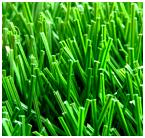 Искусственная трава высокого качества из Китая.